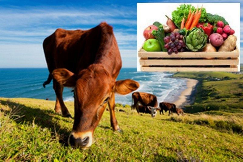 Yeoman Agencies - grass fed beef